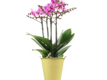 piante e vasi online